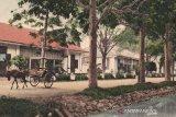 Telaah - Pohon perindang dan kisahnya di Kota Magelang