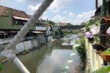 Yogyakarta mengintensifkan aksi bersih sungai hadapi