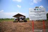 Pemkab Donggala kerja sama dengan WVI bangun Demplot padi organik