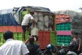 Polisi sita 12 ton daun kratom