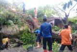 Dua rumah tertimpa pohon saat hujan dan angin kencang landa Agam