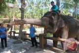BKSDA rekomendasikan penambahan populasi gajah di Lombok