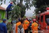 Ohim apes, memotong pohon justru tewas tersengat listrik
