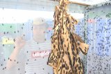 Pengelola mengecek Lalat Tentara Hitam (hermetia illucen) atau Black Soldier Fly (BSF) yang dibudidayakan di Tembok Rejo, Banyuwangi, Jawa Timur, Selasa (15/10/2019). Budidaya lalat yang menghasilkan maggot (larva) itu, selain mampu mengurai sampah organik hingga tiga kali berat tubuhnya juga sebagai pakan ternak yang dijual seharga Rp5 per kilogram. Antara Jatim/Budi Candra Setya/zk.