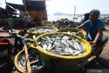 Nelayan membawa ikan layang ke Tempat Pelelangan Ikan, Pelabuhan Muncar, Banyuwangi, Banyuwangi, Jawa Timur, Selasa (15/10/2019). Nelayan setempat mengatakan, saat musim padangan (bulan purnama) sebagian besar nelayan banyak yang libur melaut, yang berdampak pada meningkatnya harga ikan di pasaran seperti ikan layang yang sebelumnya seharga Rp10 ribu naik menjadi Rp18 ribu per kilogram. Antara Jatim/Budi Candra Setya/zk.