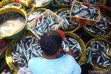 Pedagang memilih ikan layang di Tempat Pelelangan Ikan, Pelabuhan Muncar, Banyuwangi, Banyuwangi, Jawa Timur, Selasa (15/10/2019). Nelayan setempat mengatakan, saat musim padangan (bulan purnama) sebagian besar nelayan banyak yang libur melaut, yang berdampak pada meningkatnya harga ikan di pasaran seperti ikan layang yang sebelumnya seharga Rp10 ribu naik menjadi Rp18 ribu per kilogram. Antara Jatim/Budi Candra Setya/zk.