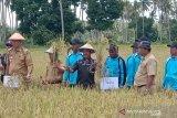Petani Donggala keluhkan kelangkaan pupuk subsidi