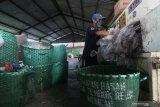 Pekerja melakukan proses pres plastik yang sudah dipilah di Pengolahan Sampah, Tembk Rejo, Muncar, Banyuwangi, Jawa Timur, Selasa (15/10/2019). Pengolahan sampah oleh Systemiq dibawah naungan Bumdes setempat yang dikerjakan oleh 63 tenaga kerja itu, mampu mengolah sekitar 13 ton sampah per hari hasil pengumpulan dari 9 ribu rumah dengan omset sekitar Rp100 juta perbulan. Antara Jatim/Budi Candra Setya/zk.