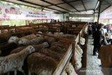 ACT: Gampong Ie Suum jadi lokasi ternak domba wakaf