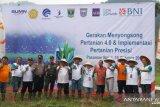 Gerakan menyongsong pertanian 4.0 BNI, smartfarming kini menyentuh Pasaman Barat