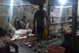 Distan Mataram temukan pemotongan hewan ilegal