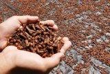 Pemprov Sulawesi Utara susun masterplan pengembangan kawasan komoditas cengkih