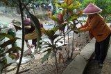 Perbaikan musala Dusun Kaligintung dipercepat