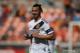 Ibrahimovic terbuka untuk gabung  Bologna