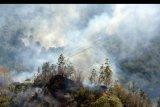 Api melalap pohon penghijauan saat terjadi kebakaran lahan dan hutan di Desa Batur, Kintamanii, Bali, Minggu (20/10/2019). Kebakaran yang mulai terjadi pada Sabtu (19/20/2019) sekitar pukul 17.00 wita tersebut meluas hingga Minggu (20/10/2019) sehingga diperkirakan telah menghanguskan puluhan hektar lahan dan hutan di kawasan obyek wisata Gunung Batur tersebut. FOTO/Nyoman Hendra Wibowo/nym