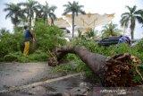 Petugas Dinas Kebersihan menyingkirkan pohon tuimbang yang menutupi badan jalan di kawasan Masjid Raya Baiturrahman, KotaBanda Aceh, Sabtu (19/10/2019). Pohon tumbang yang menutupi badan jalan akibat angin kencang disertai hujan itu mengakibatkan arus lalulintas macet, namun tidak ada korban jiwa atau kendaraan yang rusak. Antara Aceh/Ampelsa.