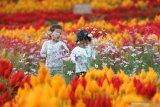 Anak-anak bermain di kebun bunga Taman Suruh, Banyuwangi, Jawa Timur, Sabtu (19/10/2019). Lahan tandus seluas 8 hektar itu, dimanfaatkan untuk kebun bunga sebagai tempat wisata. Antara Jatim/Budi Candra Setya/zk.