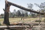 Pemkab Bandung siapkan bantuan untuk korban angin kencang di Pengalengan