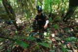 Petugas pengamanan perbatasan RI-PNG temuka ranjau aktif di sekitar kampung Mosso