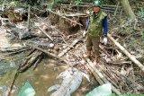 Hati-hati, buaya makin banyak berkeliaran di Sungai Mentaya