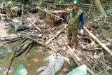 Buaya makin banyak berkeliaran di Sungai Mentaya