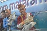 BKIPM: nilai pengiriman lobster NTB capai Rp7,4 miliar