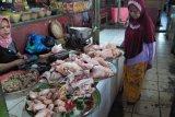 Distan Mataram rekomendasi datangkan ayam beku stabilkan harga