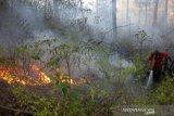 Kebakaran hutan pinus Malino