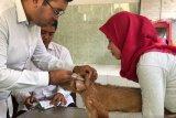 Dinas Pertanian Yogyakarta sebut 70 persen populasi hewan divaksinasi rabies