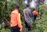 Kakek renta hilang di hutan Silayu Malalak