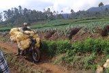 Pemerintah harus berani buat putusan  politik wujudkan ketahanan pangan