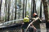 Kebakaran hutan di Kabupaten Gowa mulai padam