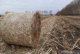 Begini cara petani Mongolia raup untung Rp5,9 miliar per tahun dari jerami
