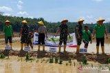 Kodim Poso dan Pemkab Poso cetak 150 hektare sawah baru
