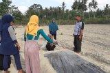 Perempuan penyintas bencana di Sigi dilatih bidang pertanian