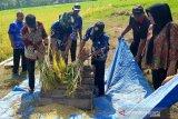 BI Sulsel gunakan metode Hazton bantu produktivitas padi di Kabupaten Gowa