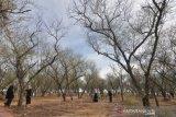 Pengembangan Hutan Kota Kaombona Palu butuh dana Rp300 miliar
