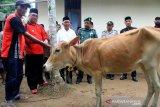 Bupati Aceh Barat Ramli MS (kedua kiri) menyerahkan ternak sapi Aceh secara simbolis kepada kelompok tani Aneuk Nanggroe di Desa Lubuk Pasi Ara, Kecamatan Woyla Barat, Aceh Barat, Aceh, Senin (28/10/2019). Pemerintah Kabupaten Aceh Barat melalui Dinas Perkebunan dan Peternakan menyalurkan bantuan hewan ternak berupa 20 ekor sapi, 10 ekor kerbau dan empat ribu ekor bibit ayam dan bebek kepada 22 kelompok tani dengan tujuan untuk meningkatkan produksi ternak dalam rangka mempercepat penganekaragaman pangan sekaligus untuk meningkatkan dan memperkuat perekonomian rakyat secara keseluruhan. Antara Aceh/Syifa Yulinnas.