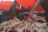 Legislator desak Disperindag Palangka Raya tekan harga daging ayam potong