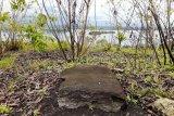 Balai Arkelogi Papua temukan peninggalan megalitik di Yomokho Jayapura