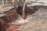Gelombang pasang hantam pemukiman penduduk di pantai selatan Sikka