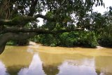 Pekanbaru harus siap hadapi ancaman banjir