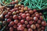 Harga tomat lokal Lampung naik