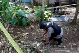 Tim Gegana Polda DIY evakuasi granat aktif di Gunung Kidul