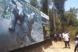 Suaka Rhino Sumatera II habitat bagi badak liar Way Kambas