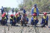Pertamina melibatkan pelajar tanam bibit mangrove di Luwu