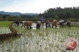 Mengembalikan kecintaan generasi muda pada pertanian tanaman pangan berkelanjutan