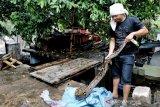 Warga menemukan ular piton saat hujan di Sungai Cikapundung Bandung