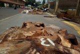 KPBB: Penebangan pohon di Cikini langgar komitmen Jakarta lindungi iklim