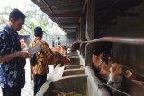 Mengembangkan karakter pegawai Polbangtan YoMa dengan membuat biogas